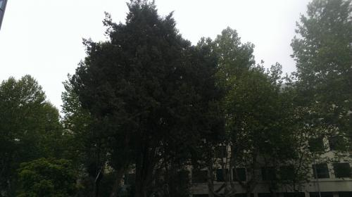 IMAG0132
